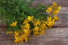 Big bunch of fresh yellow flowers Hypericum Royalty Free Stock Photography