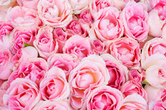 Big bunch of multiple pink roses Stock Photo