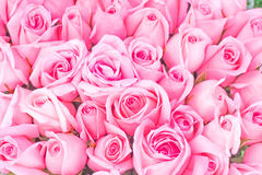 Big bunch of multiple pink roses Royalty Free Stock Photography