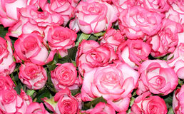 Big bunch of multiple pink roses of a bride. On a wedding from top, of bridal photos series Royalty Free Stock Photos