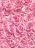 Big bunch of multiple pink roses of a bride. On a wedding from top, of bridal photos series Royalty Free Stock Photo