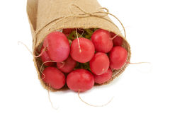 Big bunch of radish wrapped in canvas isolated on white backgrou Royalty Free Stock Photos