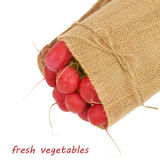 Big bunch of radish wrapped in canvas isolated on white backgrou Royalty Free Stock Photography