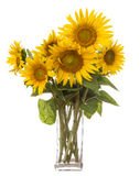 A big bunch of sunflowers Royalty Free Stock Images