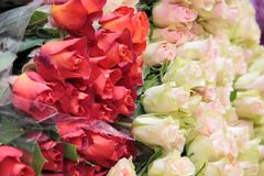 Big bunch of white and red roses Royalty Free Stock Photo