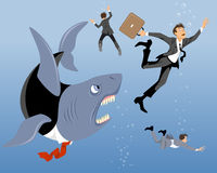 Big business shark Stock Image