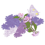 Big Butterfly Sitting Down on Blooming Lilac and Royalty Free Stock Photos