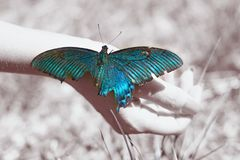 Big Butterfly sitting of a girl`s hand, bright swallowtail on the hand. On the street stock images