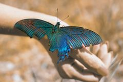 Big Butterfly sitting of a girl`s hand, bright swallowtail on the hand. On the street royalty free stock photography