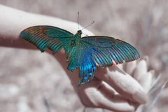 Big Butterfly sitting of a girl`s hand, bright swallowtail on the hand. On the street royalty free stock photos