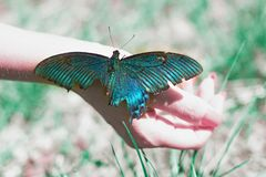 Big Butterfly sitting of a girl`s hand, bright swallowtail on the hand. On the street royalty free stock images