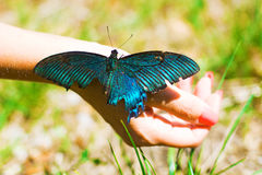 Big Butterfly sitting of a girl`s hand, bright swallowtail on the hand. On the street stock photography