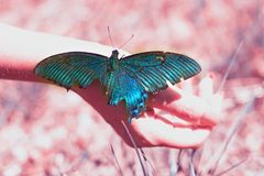 Big Butterfly sitting of a girl`s hand, bright swallowtail on the hand. On the street stock image