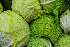 Big cabbage heads from Savoy variety. Beautiful hues of green and yellow of the Savoy cabbage at the Farmer`s market. Horizontal shot with the possibility of stock photos