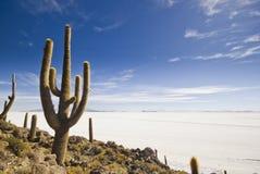 Big cactus above salar de uyuni Royalty Free Stock Photo