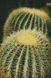 Big Cactus Close up. Photo of Big Cactus Close up Royalty Free Stock Images