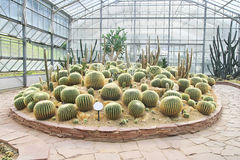 Big cactus garden on sand ground,conservatory Royalty Free Stock Photos