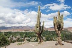Big cactus Stock Photography