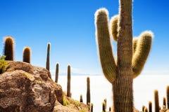 Cactus on Incahuasi island, Salar de Uyuni, Bolivia Royalty Free Stock Image