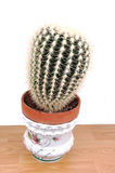 A big cactus in an pot. Stock Photography