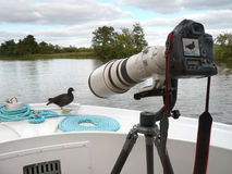 Big Camera & Lens - Moorhen royalty free stock photo