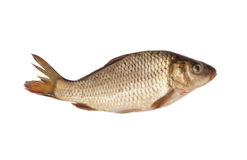 Big carp Stock Photos