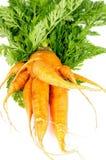 Big Carrot Royalty Free Stock Photos