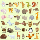Big cartoon animal set Royalty Free Stock Photography