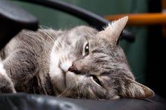 Big cat Stock Images