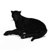 Big Cat Black Jaguar Stock Image