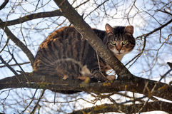 Big cat climbed the tree. stock images