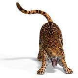 Big Cat Jaguar vector illustration