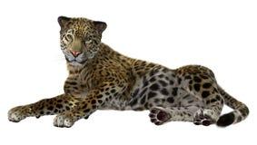 Big Cat Jaguar Royalty Free Stock Photography