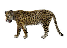 Big Cat Jaguar. 3D digital render of a big cat jaguar isolated on white background Stock Photo
