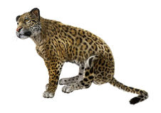 Big Cat Jaguar Stock Photo