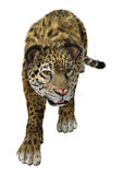 Big Cat Jaguar on White Stock Photo