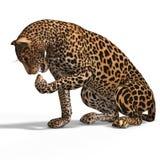 Big Cat Leopard Stock Image