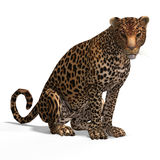 Big Cat Leopard Royalty Free Stock Photo