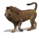 Big Cat Lion Male Stock Images
