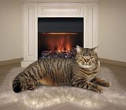 Cat and fireplace 1 royalty free stock photos