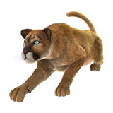 Big Cat Puma. 3D digital render of a big cat puma hunting isolated on white background Stock Image