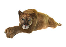 Big Cat Puma. 3D digital render of a big cat puma resting isolated on white background Stock Photo