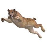 Big Cat Sabbertooth Stock Photo