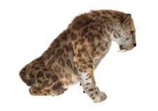 Big Cat Sabertooth Royalty Free Stock Images