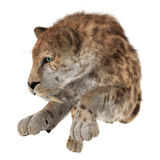 Big Cat Sabertooth Royalty Free Stock Photo