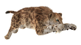 Big Cat Sabertooth. 3D digital render of a big cat sabertooth isolated on white background Stock Images