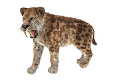 Big Cat Sabertooth. 3D digital render of a big cat sabertooth isolated on white background Stock Photo