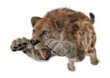 Big Cat Smilodon Stock Photos