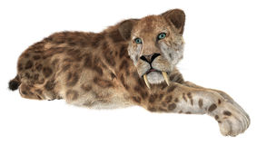 Big Cat Smilodon Royalty Free Stock Images