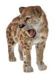 Big Cat Smilodon Royalty Free Stock Image